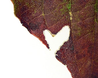 Heart Leaf Photo, Red Leaf and Heart, Nature Photography, Valentine, Wedding or Anniversary Gift, 4 x 6 Print