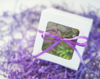 Mothers Day Succulent gift box succulent gift birthday gift office gift housewarming gift teacher gift graduation gift sympathy thank you