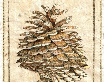 Ink Drawing on teabag, pine cone painting,teabag art, mixed media,original art, sepia drawing,pinecone drawing, original art
