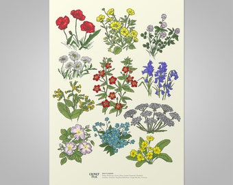 Irish Flowers Study - Print