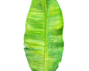Banana Leaf Watercolor Painting - 8 x 10 (8.5x11 paper) - Giclee Print - Tropical Green Foliage Botanical Art Print
