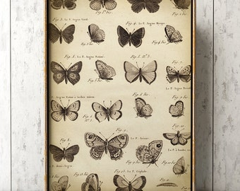large Butterfly print, Butterfly poster A3, butterflies wall decor, scientific butterflies study, antique butterfly, black and white print