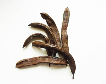 Set of 6 carob pods dried for decoration