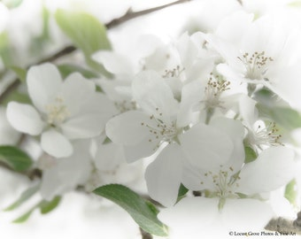 Flowering Crabapple Tree, White Spring Blossoms, Nature Photography, White Art Print, Nuetral Wall Art, Crabapple in Spring