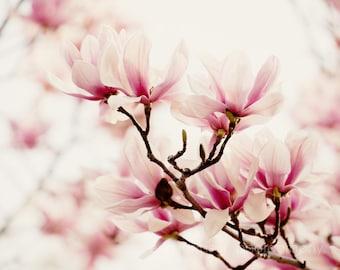pink flower photography, pink tulip trees, pink home decor, nature art, pink wall art, nursery decor, Japanese Magnolia I