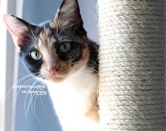 Curious - Cat Photo Print - 8x10 Photo - Cat Photography - Curious Cat Photo - Calico Cat Photo - Gift for Cat Lovers
