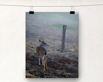 Deer Photo, Wildlife Photography, Animal Country Art, Buck Deer