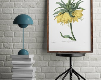 Botanical print, Antique print flowers, Yellow flower print, wall art decor, Home Office decor poster, Vintage illustrations poster