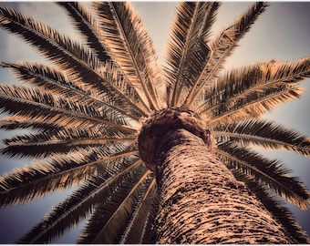 Looking up at a palm tree - signed open edition fine art giclée print