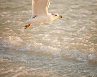 bird photography, beach home decor, seagull photography, bird in flight, beach cottage art, white home decor, ocean photography no 2