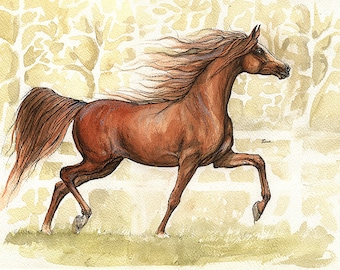 Chestnut arabian horse portrait original pen and watercolour painting