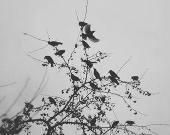 Bird Photography, Black and White Photography, Nature Photography,  Minimalism, Bird Photo, Birds Tree Photo, Goth, Fine Art Photograph