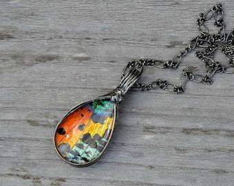 Butterfly Necklace, Tear Drop Necklace, Butterfly, Real Butterfly Wing, Wing Necklace, Butterfly Wing Jewelry, Butterfly Pendant (2778)