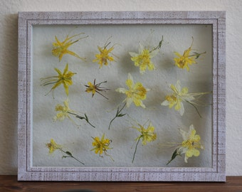 Columbine Pressed Flowers