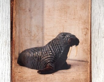 Vintage Toy Walrus  Art/Photo - Wall Art 4x6