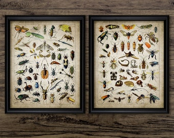 Vintage Insect Print Set Of 2 - Insect Illustration - Entomology - Insect Science Printable Art - Set Of Two Prints #698 - INSTANT DOWNLOAD