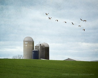 Farmhouse Decor, Silos, Rustic Home Decor, Country Landscape, Green, Blue, Flying Birds, Dairy Farm, Farm Landscape - Southbound