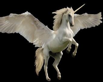 Unicorn phycic and guidance reading