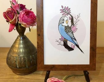 Budgie // A4 Budgie Print // Exotic Bird Print