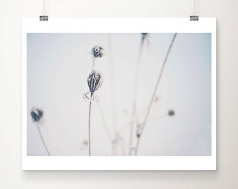 winter photograph nature photography snow photograph frost photograph blue home decor winter print minimalist decor snow print