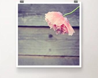 RainDance - FineArt Print Nature Flower Poppy Pink Wood Macro Rain Drops