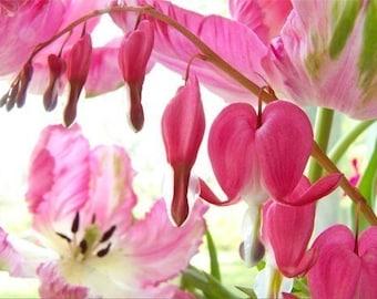 Pink Flower Card, Bleeding Hearts Card, Love Card, Anniversary Card, Blank Card, Fine Art Greeting Card, Pink