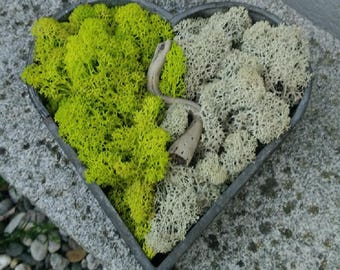 Heart wood and Lychen green and gray