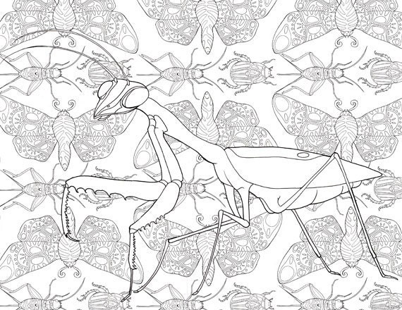 Printable Adult Coloring Page Mandala Praying Mantis Insects