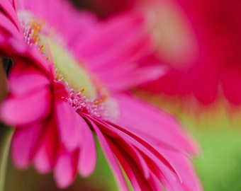Pink Daisy Flower Photography Print on Metal