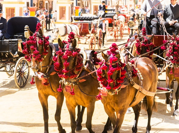 FESTIVAL HORSES. Jerez Horse Festival, Travel Photography, Spain, Equine Print, Photographic Print