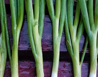 Green Bunching Onions Grown to Organic Standards Heirloom Spring Onions Mild Flavor Rare Seeds
