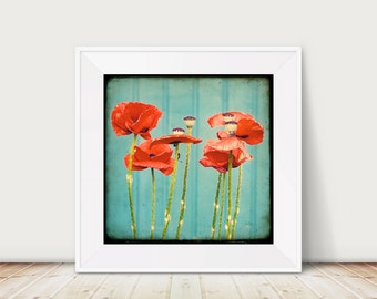 Skandinavian Summer 04 - Fine Art Print Poppy Nature Flower red green blue TTV vintage Photography