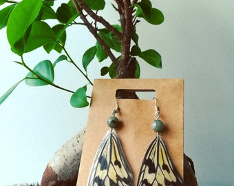 Real butterfly wings Earrings