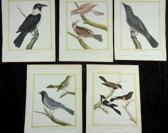 Collection of 5x Original hand colored Antique Natural History Bird Engravings by Martinet out of Buffon, c. 1780