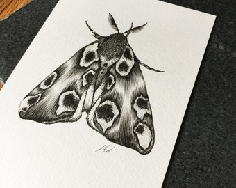 Peach Blossom Moth A5 Print- Limited Edition