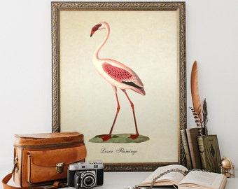 Antique Botanical Bird Print, Pink Flamingo Giclee, Vintage Natural History Print, Bird Art, Decorative Pink Lesser Flamingo Print  B021