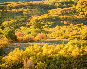 A Colorado Autumn Landscape 1:3 Wide Panoramic Photography Print - Rocky Mountain Fall - 8x24 12x36 16x48 20x60