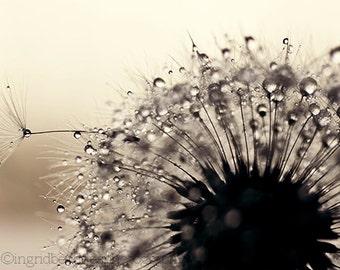Dandelion photography, dandelion wall art, silver dandelion print, macro photography, flower fine art print, home decor, wall decor, dorm