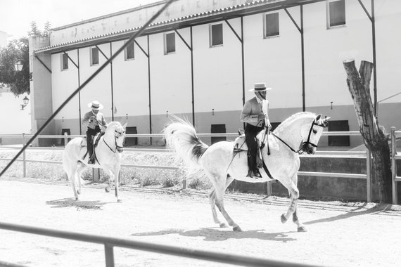 "Horse Prints, ""SPANISH HORSEMEN"". White Horses, Equine Print, Spanish Horses, Photographic Print, C Type Print, Animal Prints"
