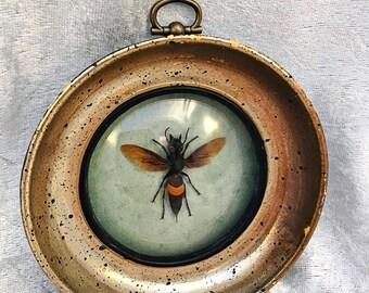Banded Hornet