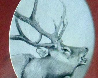 original art  drawing 11x14 elk bugleing