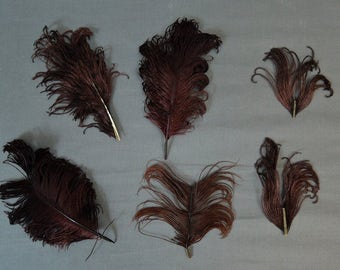 6 Vintage Millinery Hat Feathers,  4 to 8 inches, 1800s 1900s Victorian Edwardian Dark Burgundy Brown, Plumes Feathers