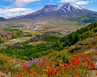 Mount Saint Helens with Indian Paintbrushes