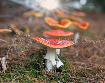 Toadstool, Digital backdrop, background, fantasy, fairy, elf, Composite, Stock