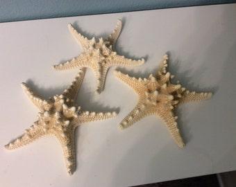 One Off white knobby Starfish