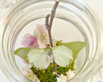 Butterfly Terrarium Kit, Real Butterfly in Glass Jar Terrarium Kit, Gift for the DIYer, Nature Lover, Green and Purple, Eco-Friendly,Outdoor