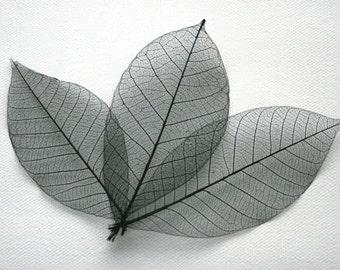 Black Skeleton Leaves