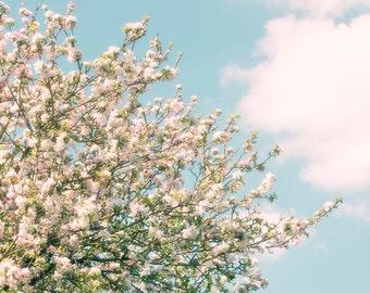 Nature Photography, Apple Blossom, Spring, Fine Art print, Home Decor.