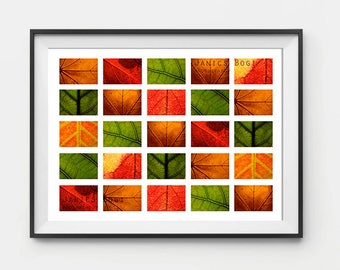Big Size Printed Collage, Plant Photography