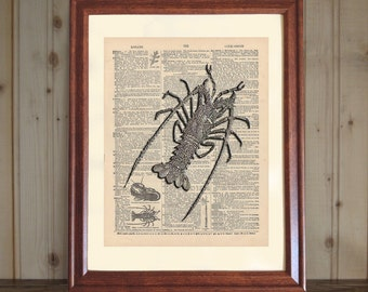 Lobster Dictionary Print, Spiny Lobster Print, Lobster Drawing, Ocean Life Print, Lobster Wall Art, Lobster Print on 5x7 / 8x10 Canvas Panel